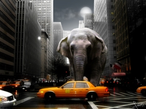 Elephant_by_Tommy92c