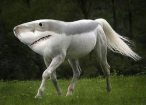 shark-horse